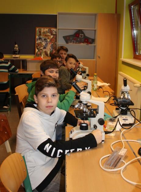 Biologie - Mikroskopieren